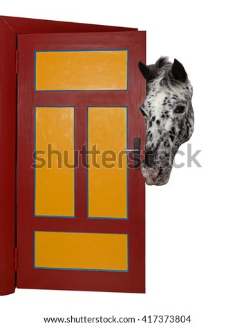 A cheeky, spotted horse is looking into a room, through a door.