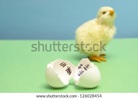 A chick has been counting the days to his release as a hatchling. - stock photo