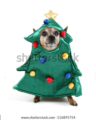 a chihuahua dressed up for christmas as a tree - stock photo