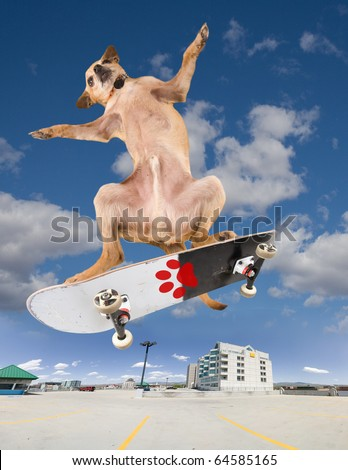 a chihuahua on a cool skateboard