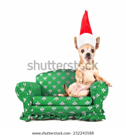 a chihuahua on a miniature couch on a white background with a santa hat on for christmas - stock photo