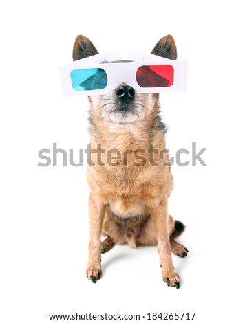 a chihuahua with 3D movie glasses on