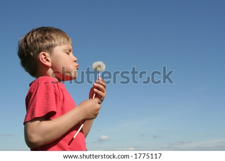A child blowing dandelion's seeds