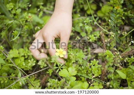 A Child'S Hands And Wild Flowers - stock photo