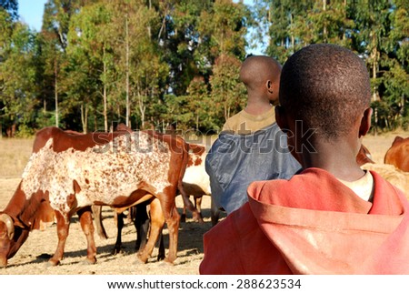 A child watching another child while grazing cows in campaigns Pomerini in Tanzania - Africa - stock photo