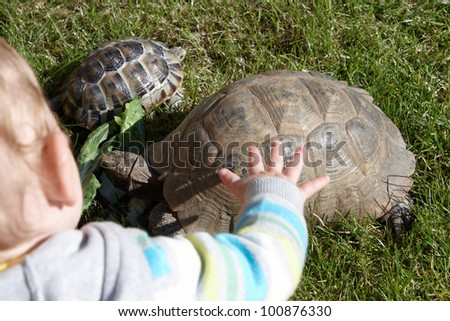 A child watching over mum and baby tortoise while eating - stock photo