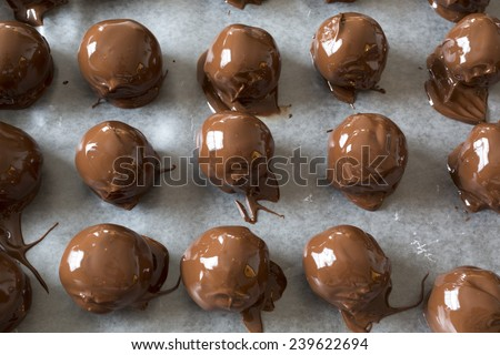 A Christmas favorite, homemade peanut butter chocolate balls. A mixture of peanut butter, nuts, sugar and other sweet stuff and then dipped in chocolate. - stock photo