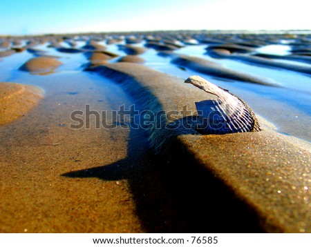 A Clam casting a shadow  on a tropical sandbar. - stock photo