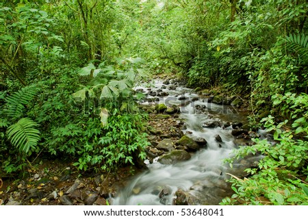 A clear stream runs through the Costa Rica rain forest.