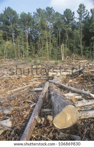 A cleared area of lumber in a Georgian logging region - stock photo