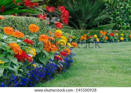 A close, ground-level view of a beautiful garden display featuring a boxwood hedge skirted by small colorful zinnias and lobellia with red crocosmia draped over it. - stock photo