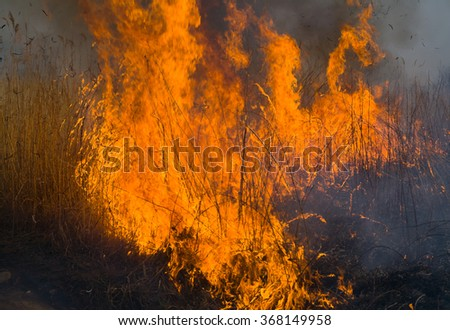 A close-uo of the flame of brushfire. Spring. - stock photo
