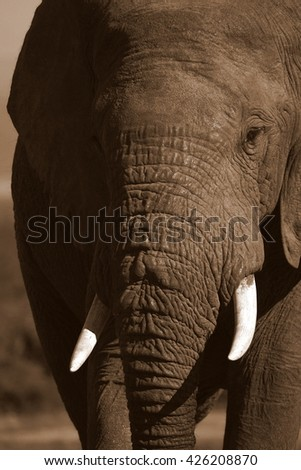 A close up abstract image of an elephants face.