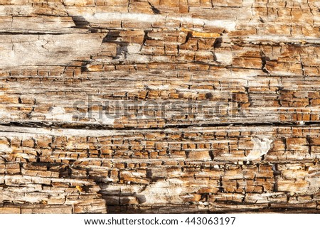 A close up background view of a section of driftwood rotting on a beach in the San Juan Islands.