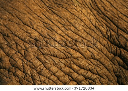 A close up black and white image of an African Elephants skin. South Africa - stock photo