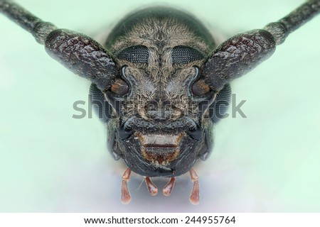A close-up face of Long horned beetle on the night. Image has grain or blurry or noise and soft focus when view at full resolution. (Shallow DOF, slight motion blur) - stock photo