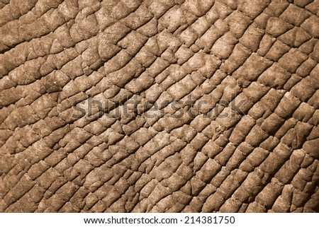 A close up image of a rhinoceros skin pattern - stock photo