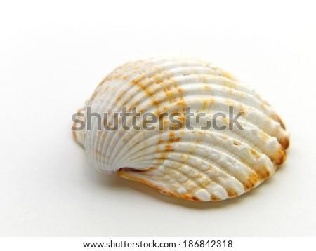 A close-up image of a sea shell. - stock photo