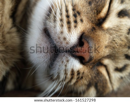 A close-up of a cat's pink nose and whiskers. - stock photo