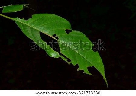 A close up of a damaged leaf - stock photo