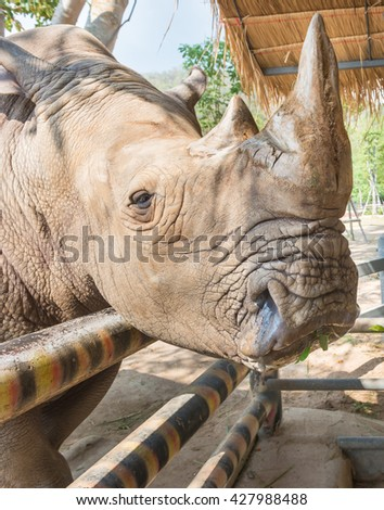 A close up of a female rhino side view. - stock photo