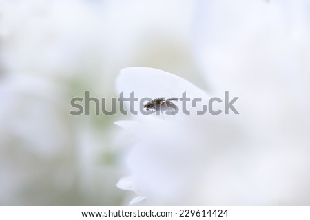 A close-up of a fly on a white flower - stock photo