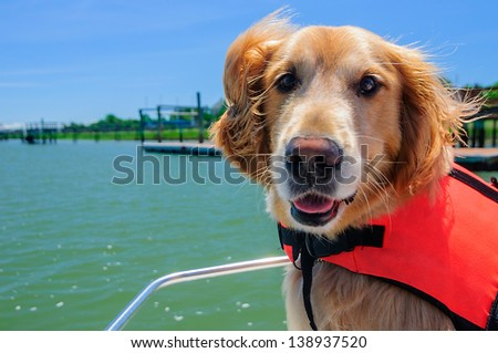 A Close Up of a Golden Retriever on a Boat - stock photo