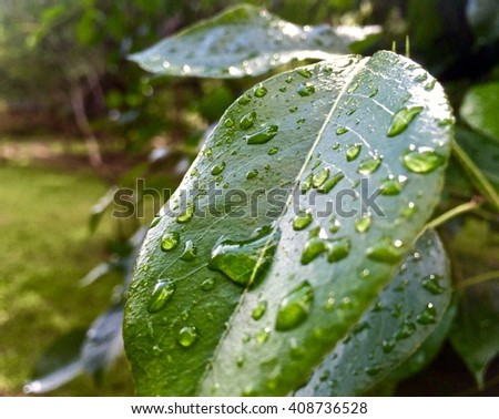 A close up of a leaf after a rain shower - stock photo