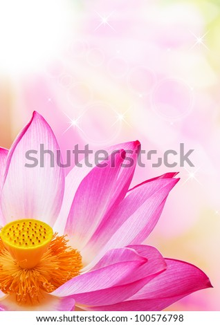 A close - up of a lotus flower - stock photo