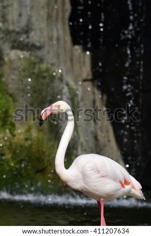 A close up of a pink flamingo. - stock photo