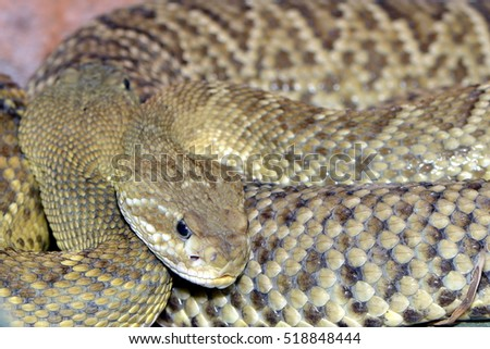 a close up of a rattle snake