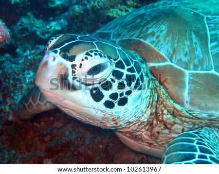 A close up of a sea turtle during my holidays in borneo