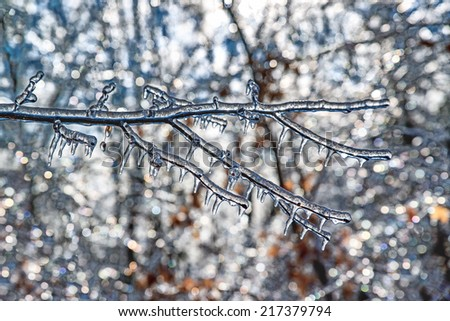 A close up of an ice covered tree branch taken with a shallow depth of field with the sparkling ice covered branches in the background.