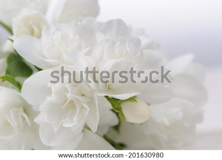 A close-up of beautiful white jasmine flowers with copy space - stock photo