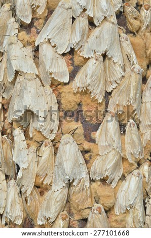 A close up of gipsy moths. - stock photo