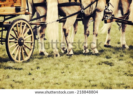 A close up of horses hooves and legs.  The horses are in a harness attached to a wagon on a grass field during a fair horse show.  Filtered for a retro, vintage look.  - stock photo