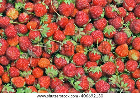 A close up of the berries of strawberry. - stock photo
