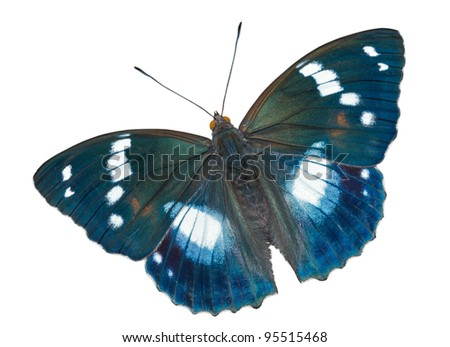 A close up of the butterfly (Apatura schrencki). Isolated on white. - stock photo