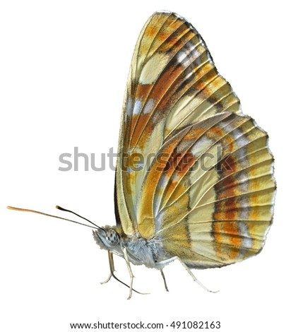 A close up of the butterfly (Neptis thisbe), profile. Isolated on white.