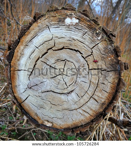 A close up of the cut of a tree - stock photo