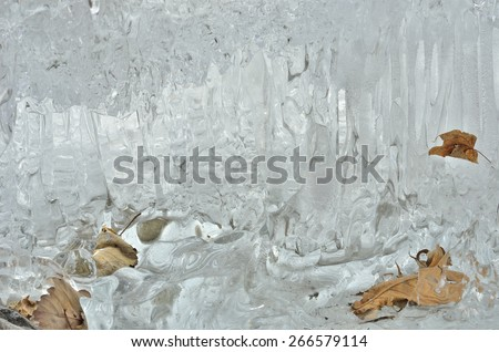 A close up of the dry yellow leaves in melting ice. - stock photo