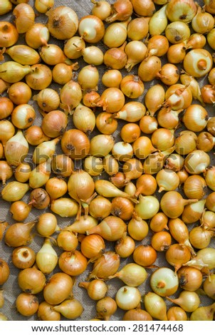 A close up of the drying onion. - stock photo