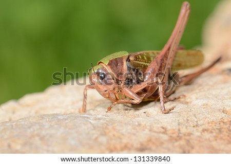 A close up of the grasshopper