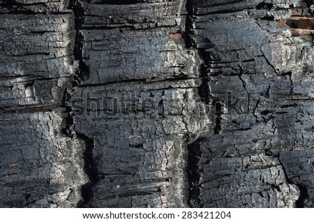 A close up of the part of burned tree after forest fire. - stock photo