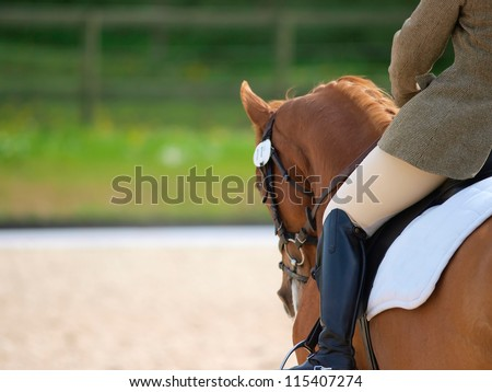 A close up of the side of a horse and rider during a dressage movement shot with a shallow depth of field. - stock photo