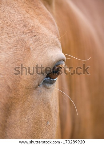 A close up of the side of the face of a chestnut horse. - stock photo