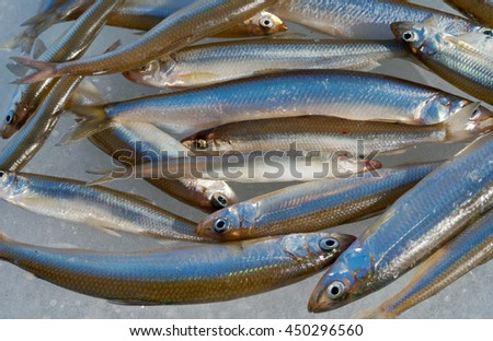 A close up of the small fishes (Smelt) on ice. - stock photo