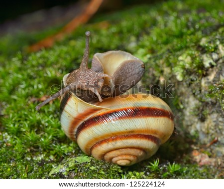 A close up of the snail on moss.