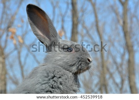 A close up of the young rabbit. - stock photo