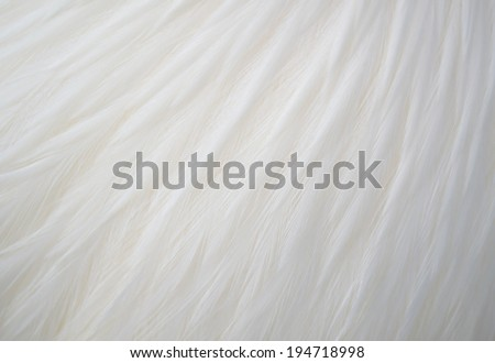 A close-up of white chicken feathers - stock photo